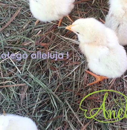 Alleluja - smacznych świąt !